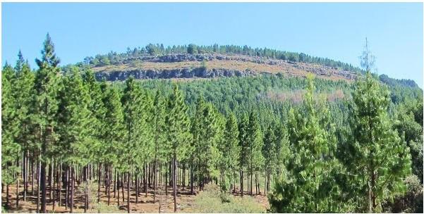 Mount Sheba Nature Reserve