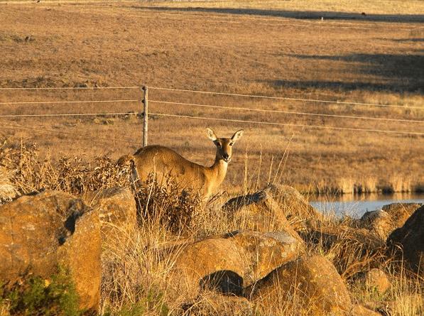 Dullstroom Wildlife